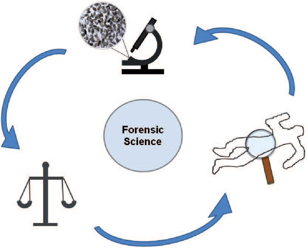 Parasites In Forensic Science A Historic Perspective Semantic Scholar