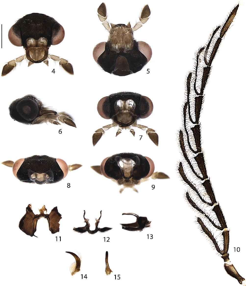 figure 4–15