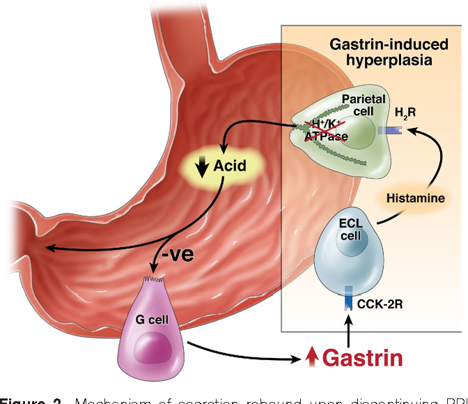 Figure 2 from Gastrin in gastrointestinal diseases