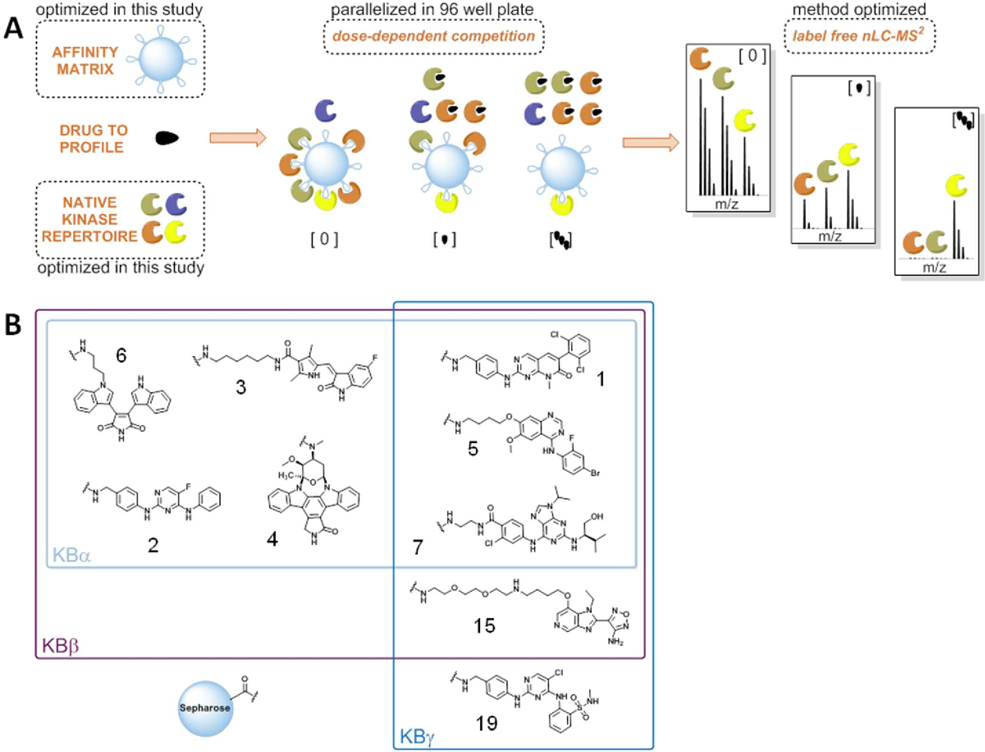 Figure 1 from Optimized chemical proteomics assay for kinase