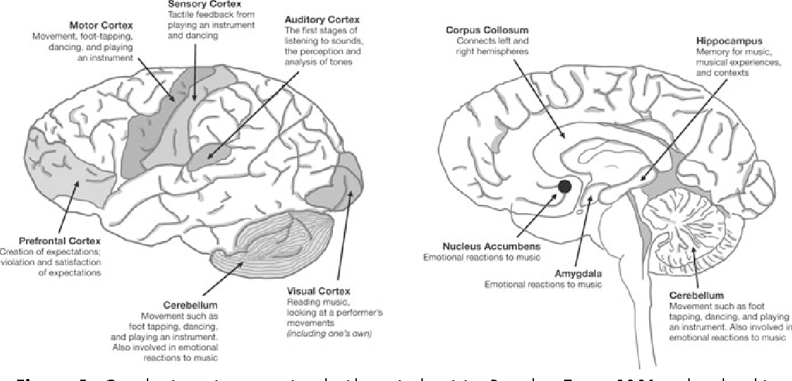 Current advances in the cognitive neuroscience of music