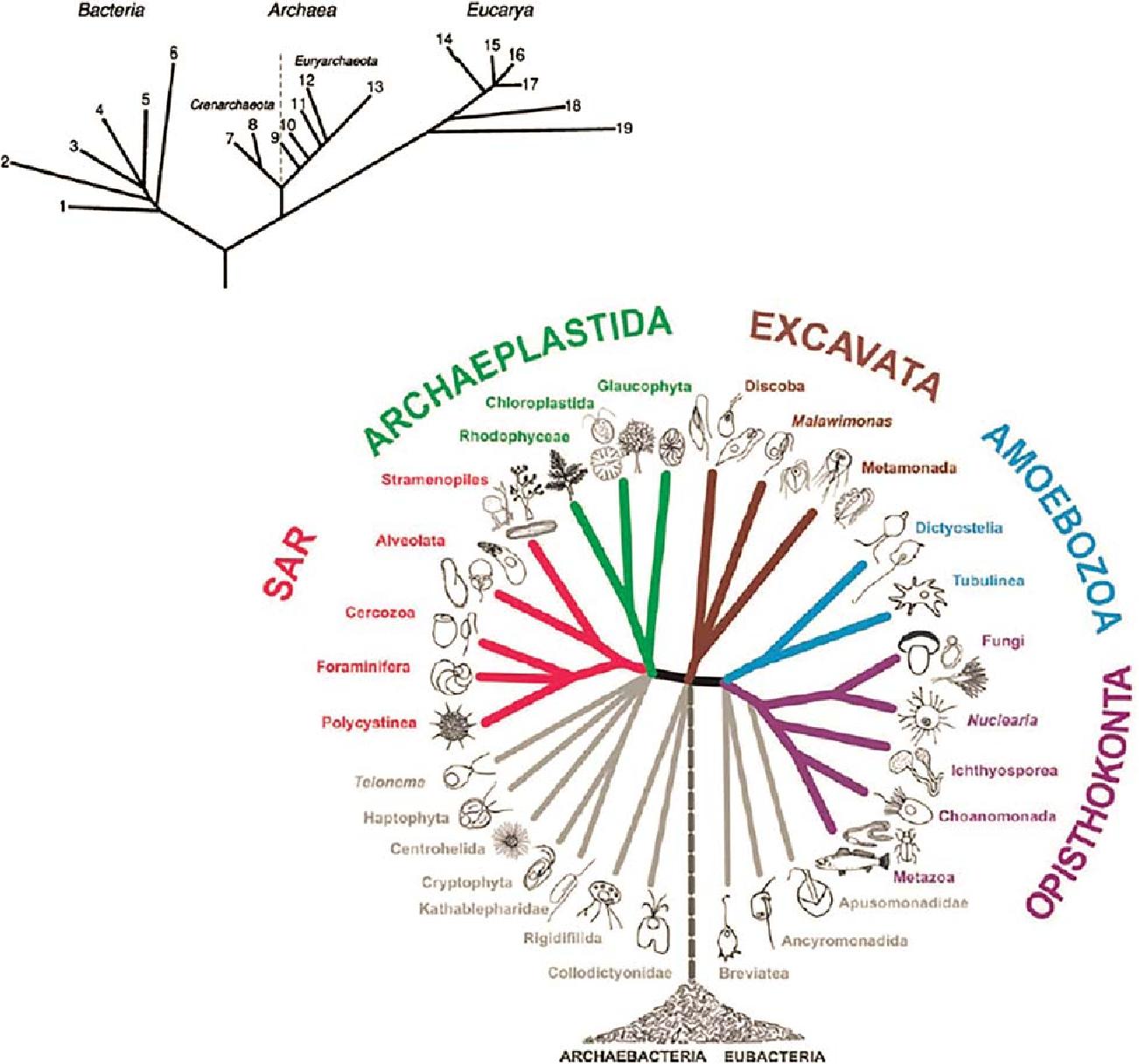 PDF] Heterotrophic Planktonic Microbes: Virus, Bacteria