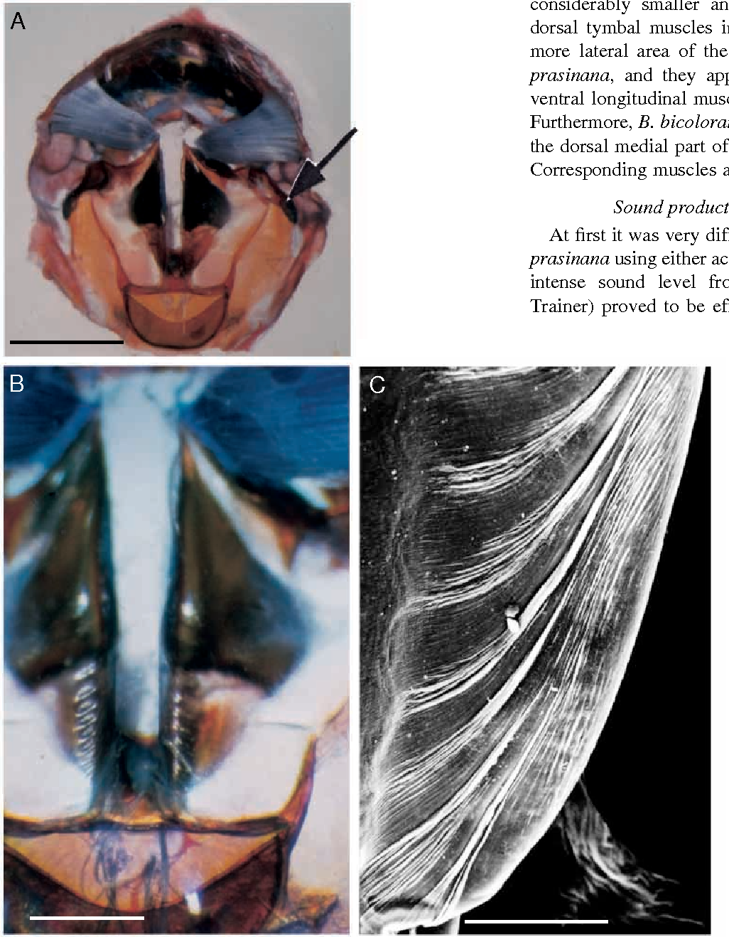 PDF] Sound production by abdominal tymbal organs in two moth