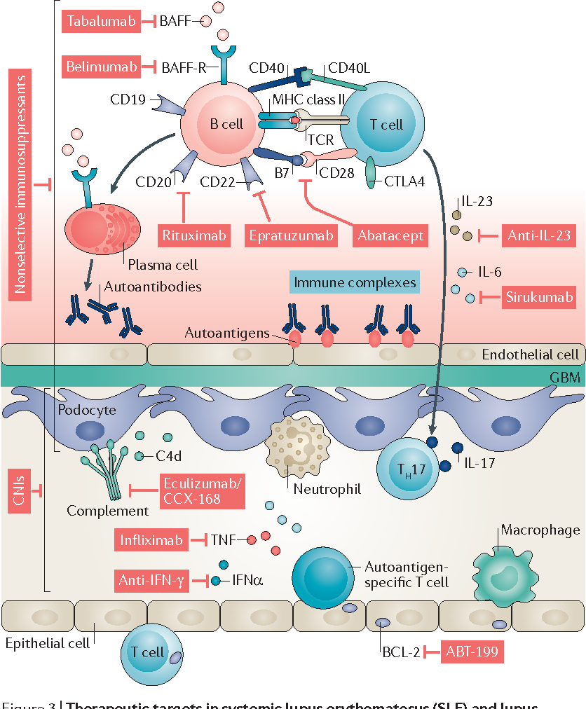 Figure 3 from Redefining lupus nephritis: clinical ...
