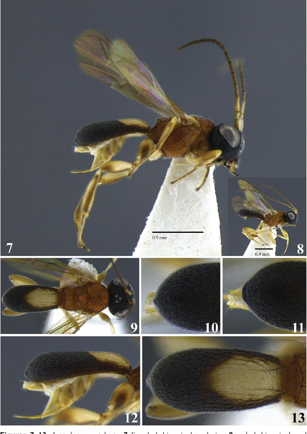 figure 7–13