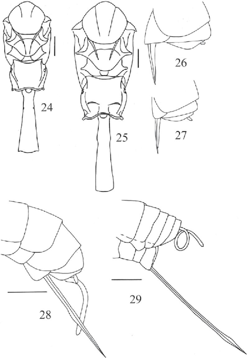 figure 24-29