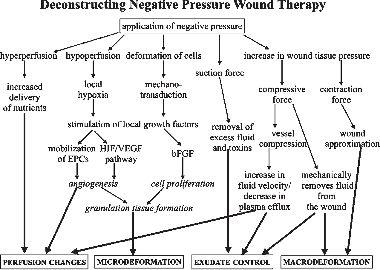 Figure 1 from Deconstructing negative pressure wound therapy
