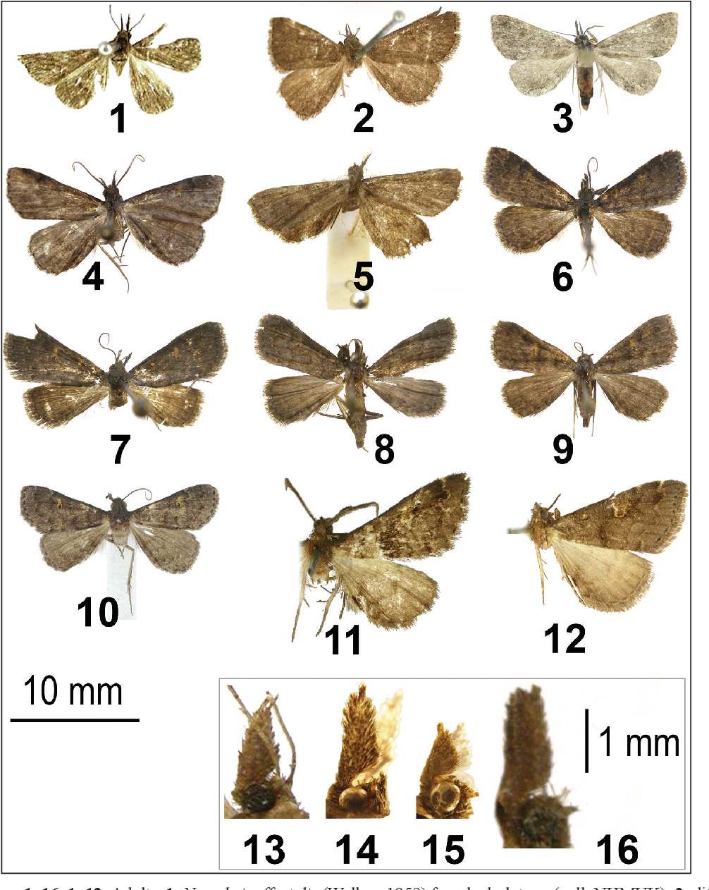 figure 1–16