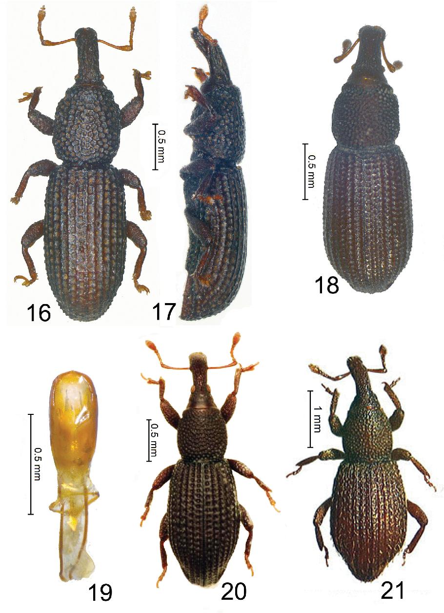 figure 16–21
