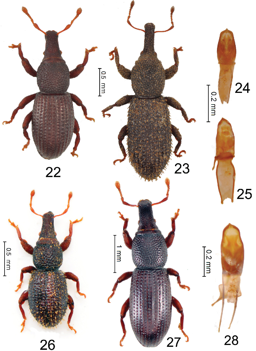 figure 22–28