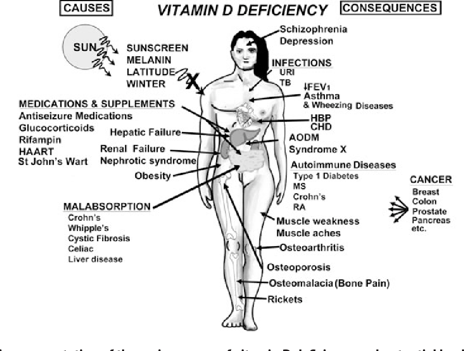 Figure 7 from Vitamin D: a D-Lightful health perspective