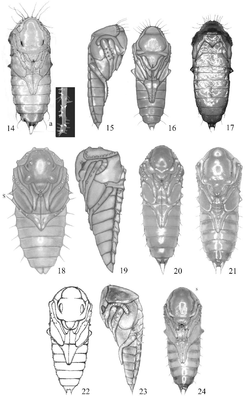 figure 14–24