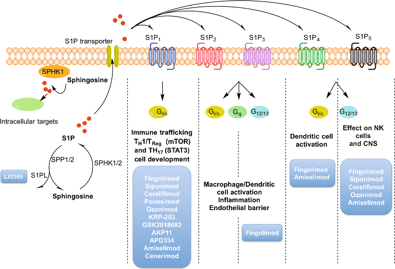 nouveau produit b8ca0 4e725 Figure 1 from Sphingosine-1-Phosphate (S1P) and S1P ...