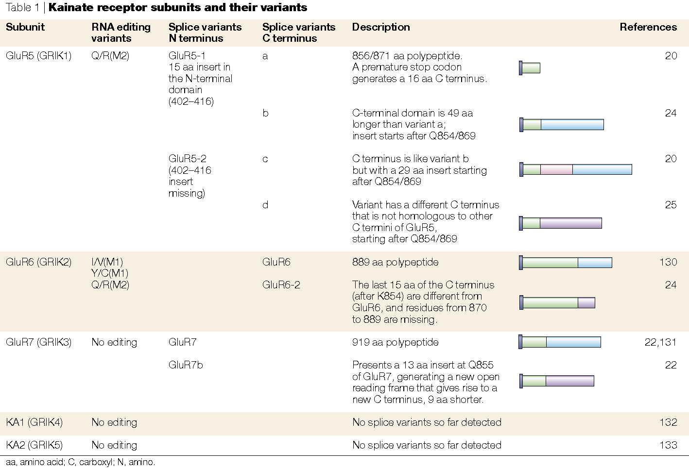 Roles and rules of kainate receptors in synaptic