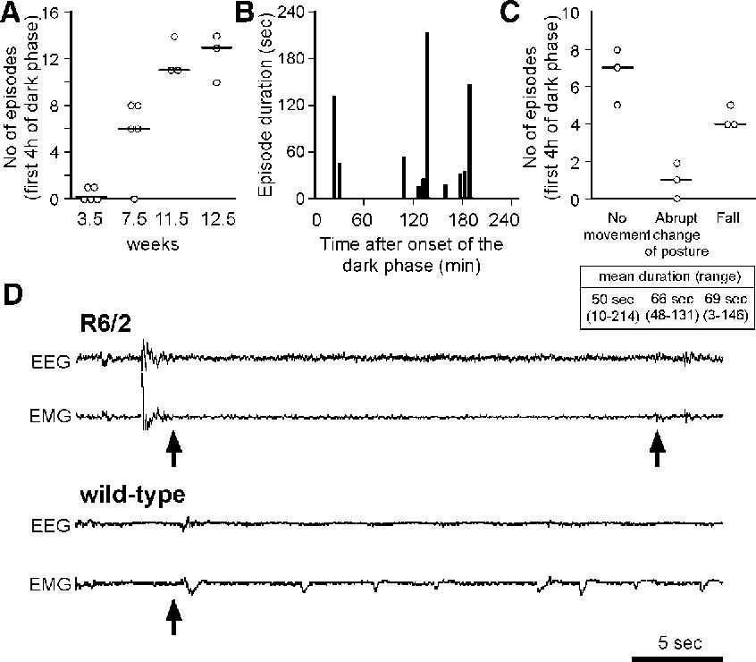 Figure 4 from Orexin loss in Huntington's disease