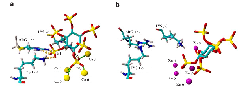 Figure 7 from Thermostable Phytase from a Bacillus sp