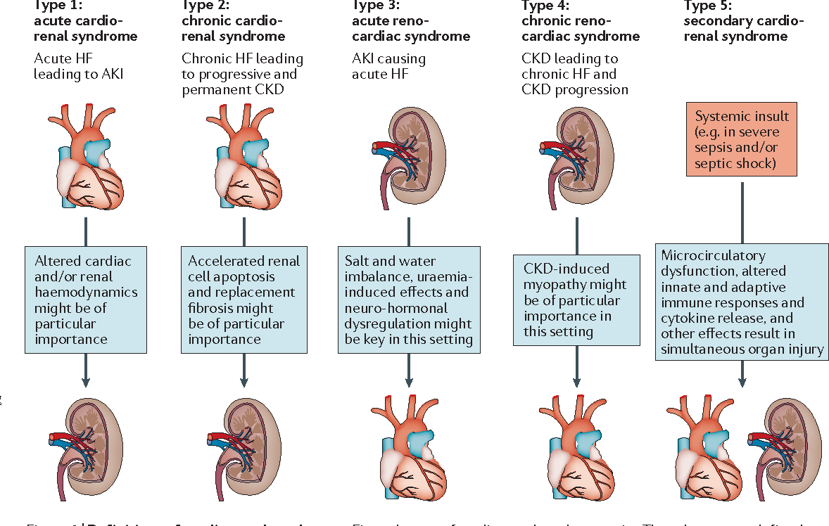 Figure 2 From Heart Failure And Kidney Dysfunction Epidemiology Mechanisms And Management Semantic Scholar