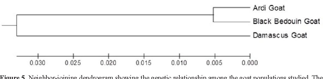 PDF] Genetic relatedness between Ardi, Black Bedouin and