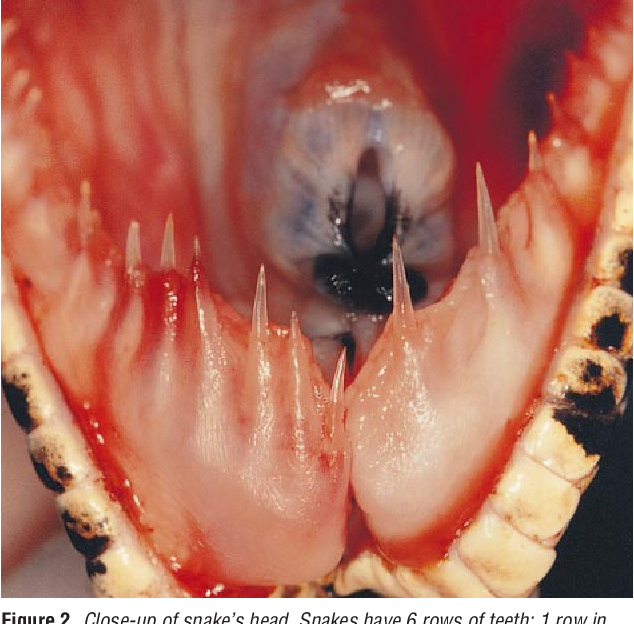 Figure 2 from Boa constrictor bite to the eye  - Semantic