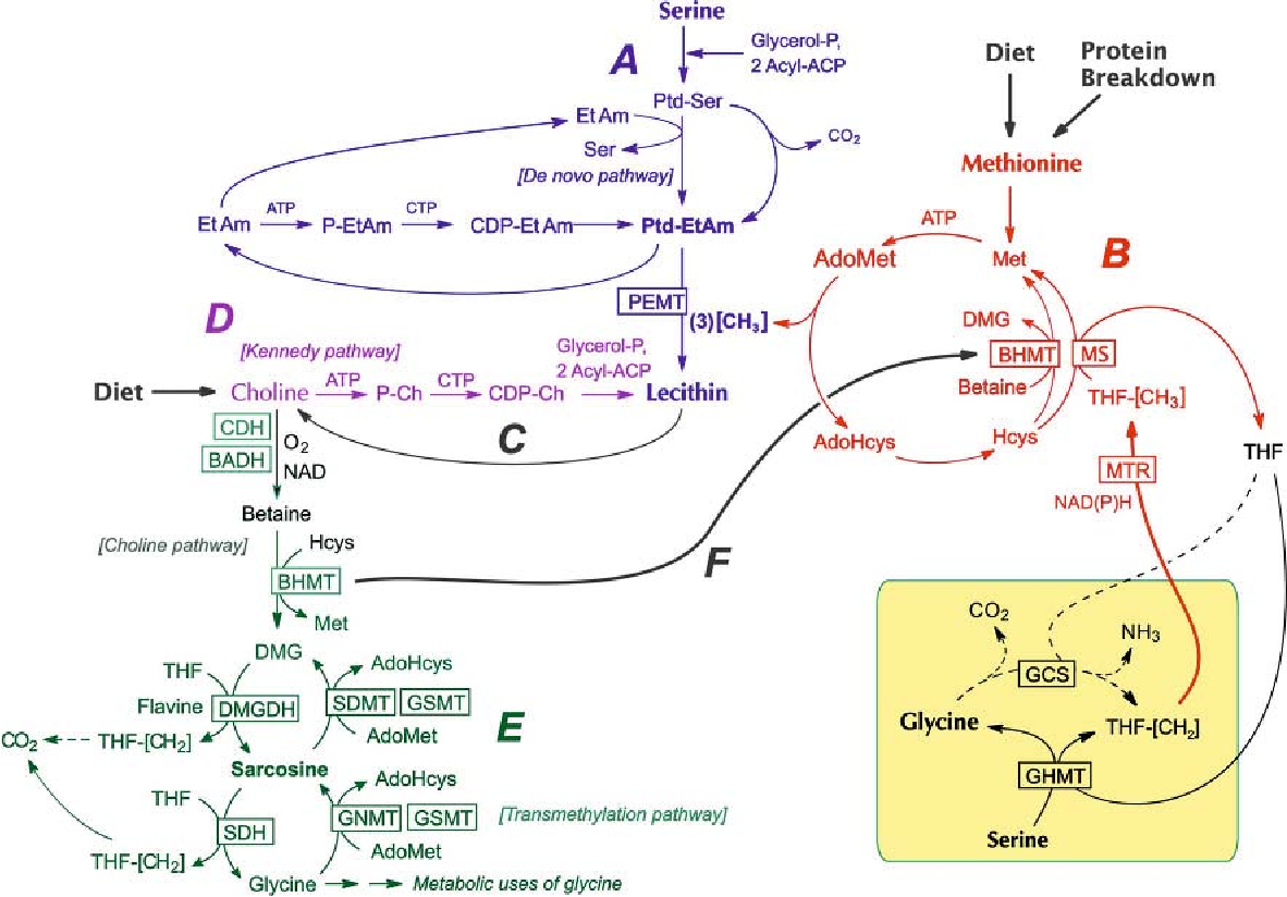 Figure 2 from A weak link in metabolism: the metabolic