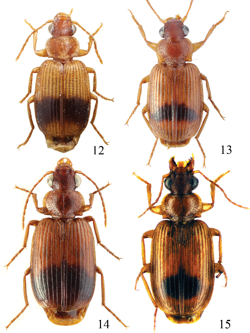 figure 12–15
