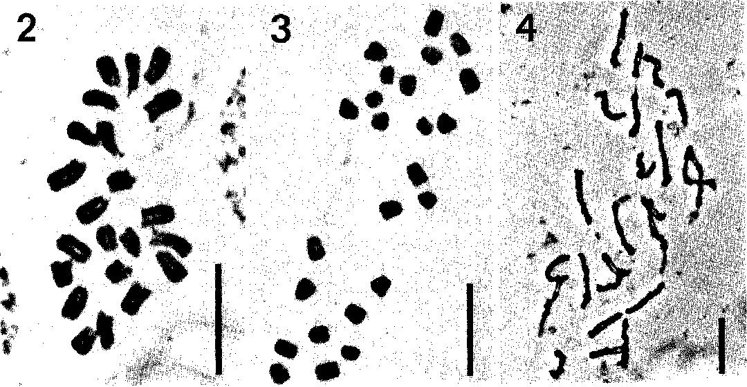 figure 2—4