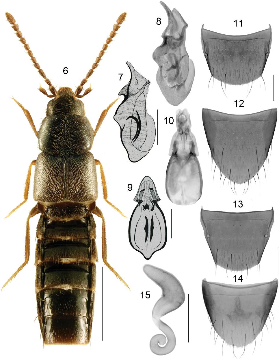 figure 6–15