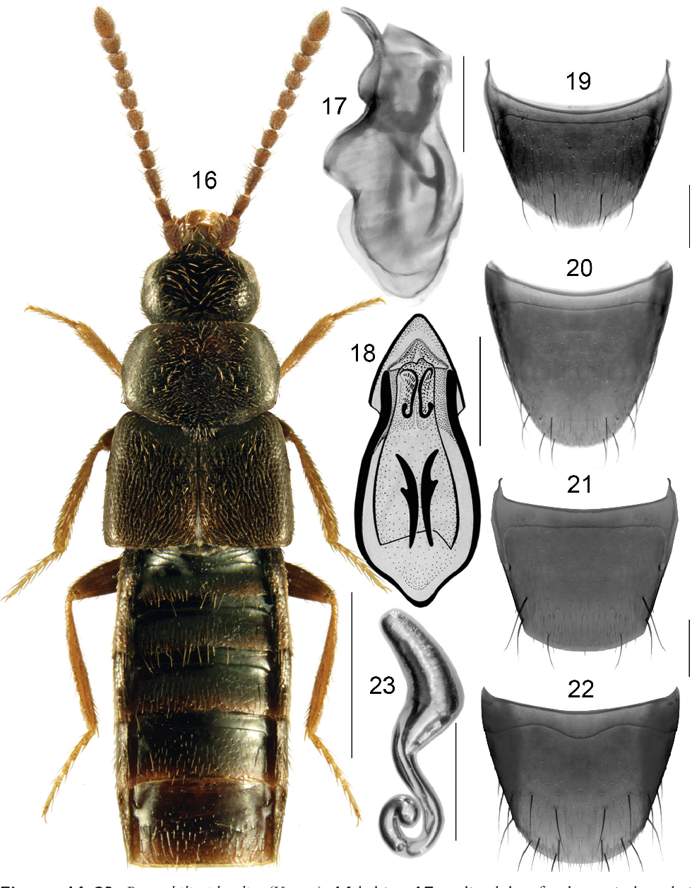 figure 16–23