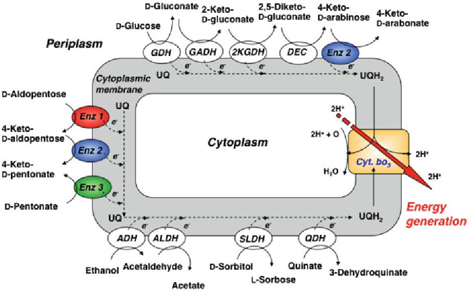 Figure 13 1 from Chapter 13 Membrane-Bound Dehydrogenases of