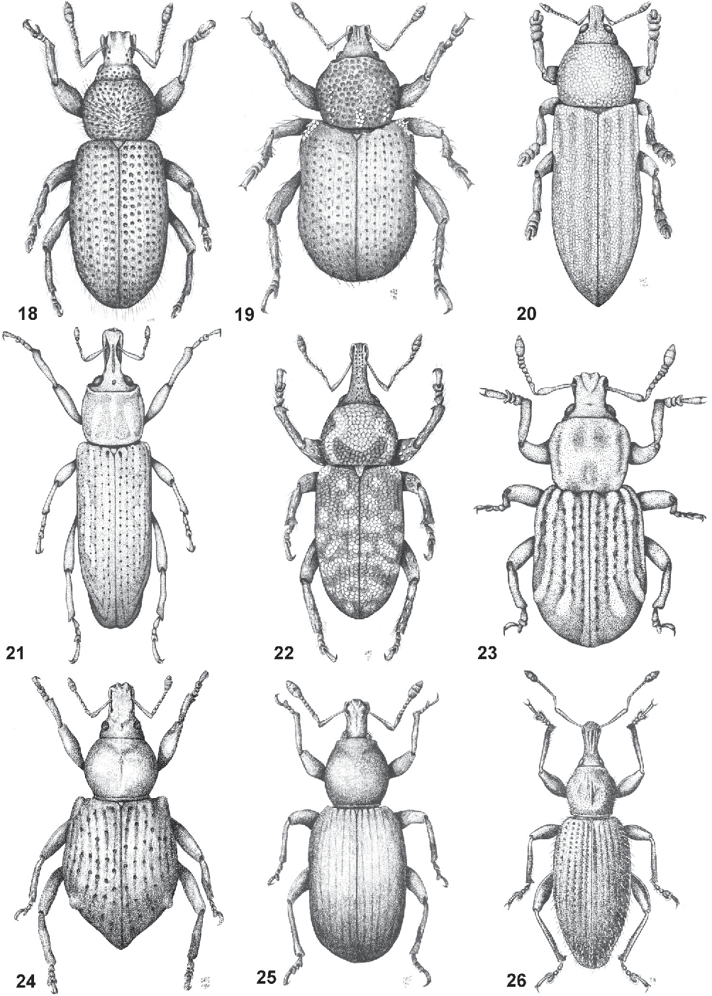 figure 18–26