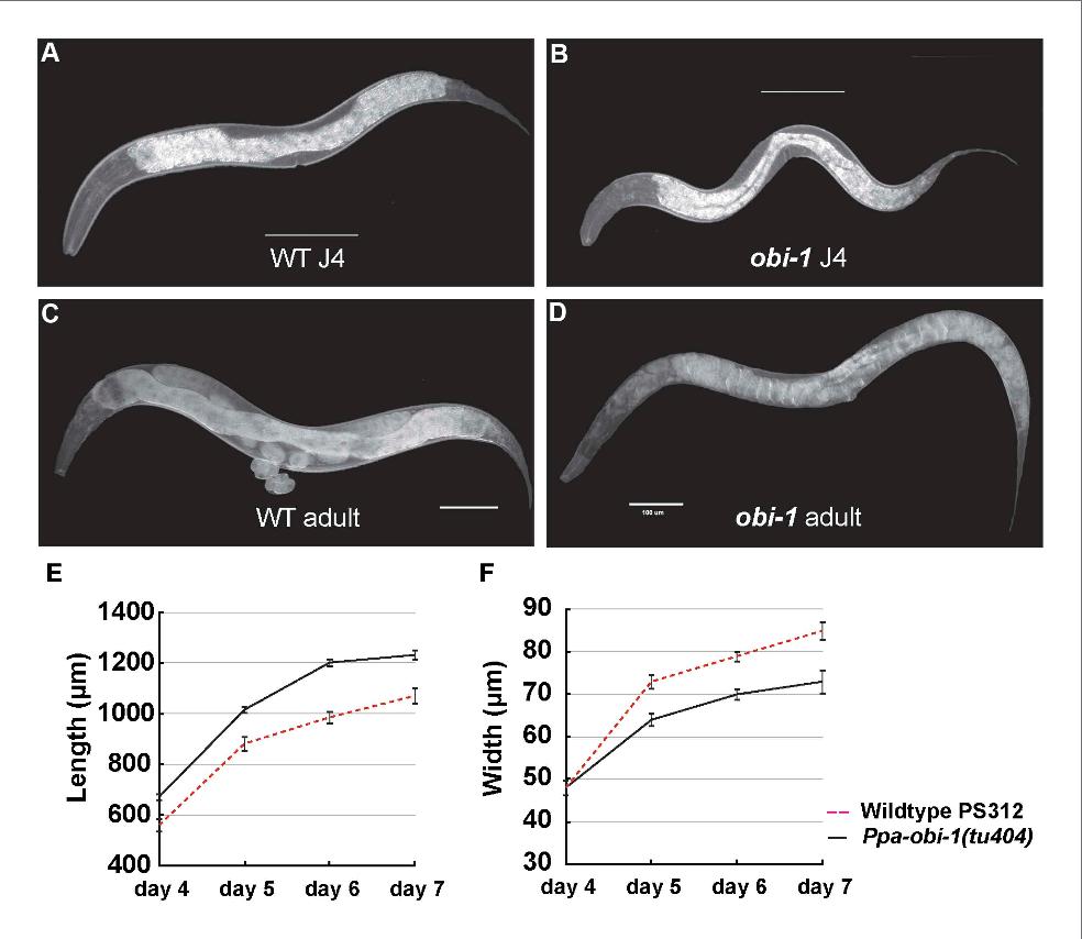 PDF] A host beetle pheromone regulates development and behavior in ...