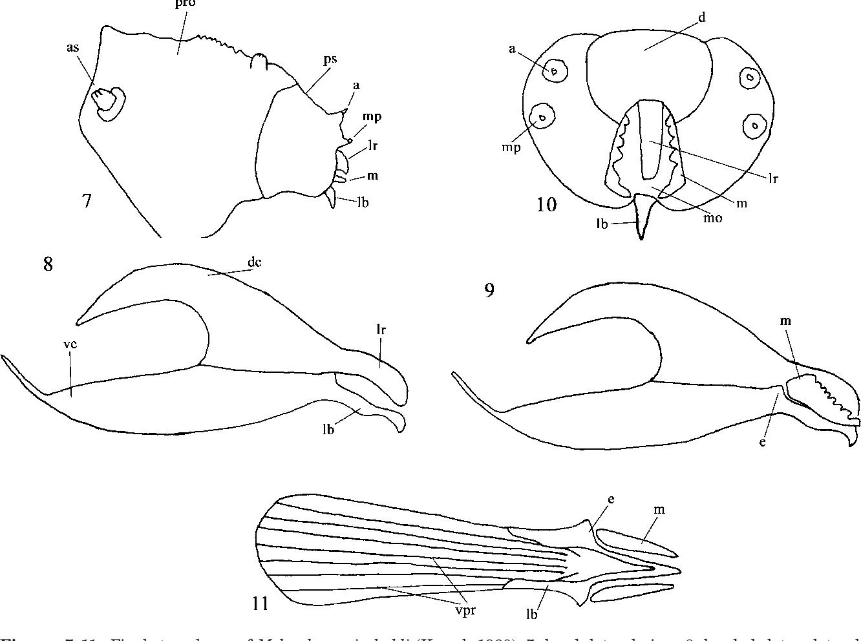 figure 7–11