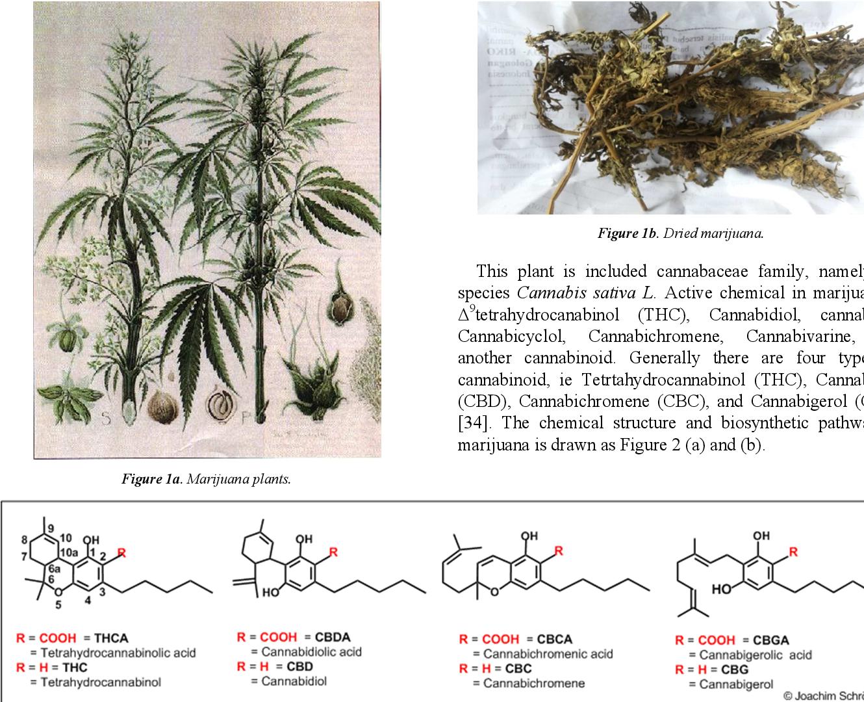 Анализ волосе марихуана фильмы про курильщиков марихуану