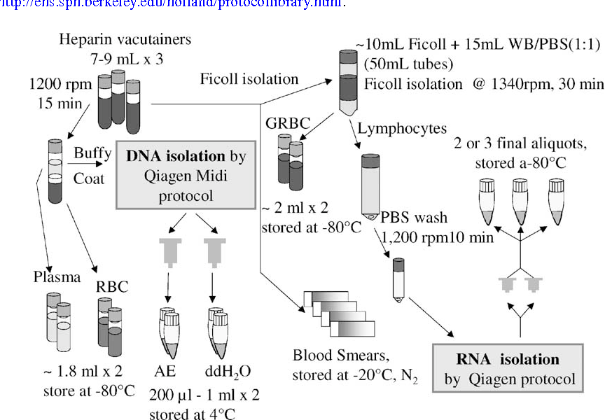 Biological sample collection and processing for molecular