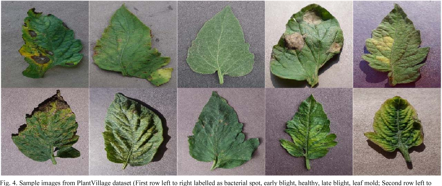 Figure 4 from Disease detection on the leaves of the tomato