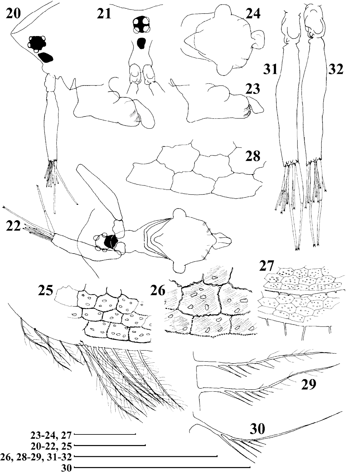 figure 20–32