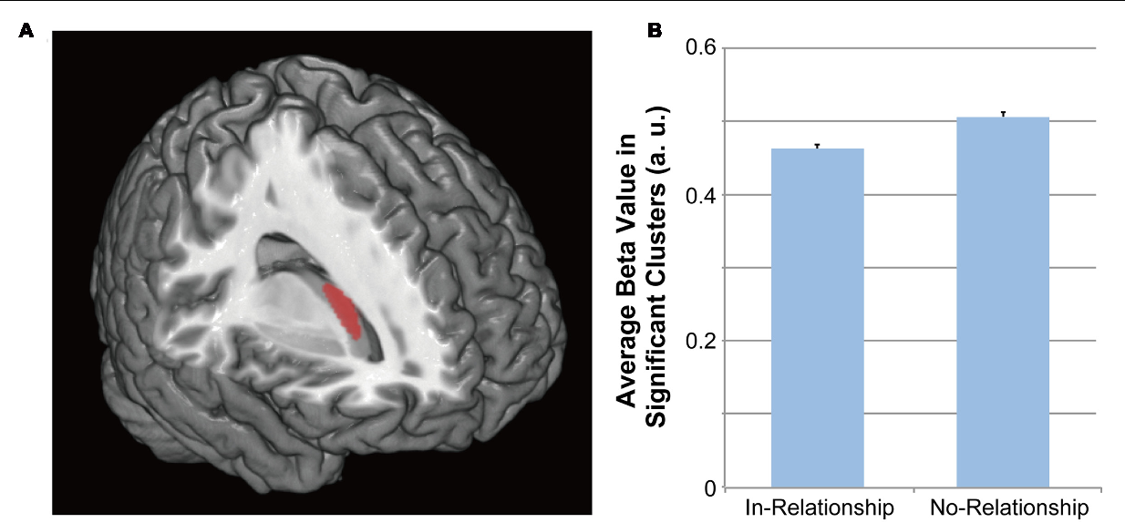 Gray Matter Density Increases During >> Figure 1 From Being In A Romantic Relationship Is Associated