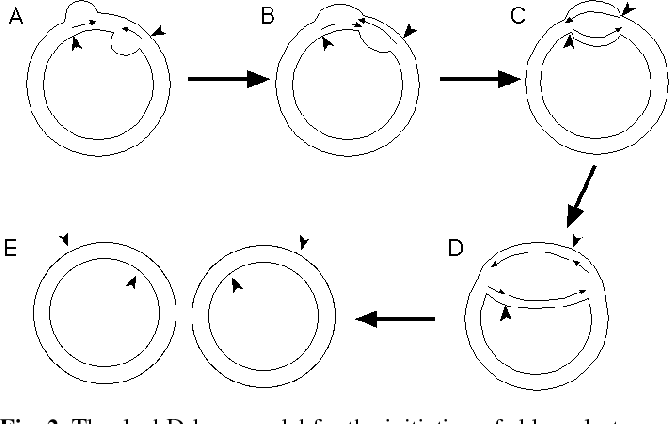 Figure 2 From Dna Replication In Chloroplasts Semantic Scholar
