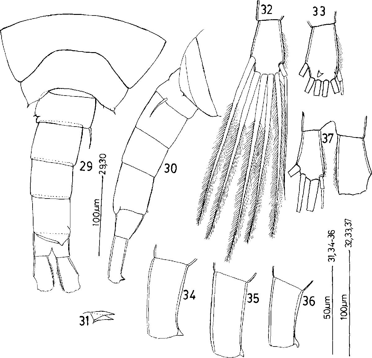figure 29-37