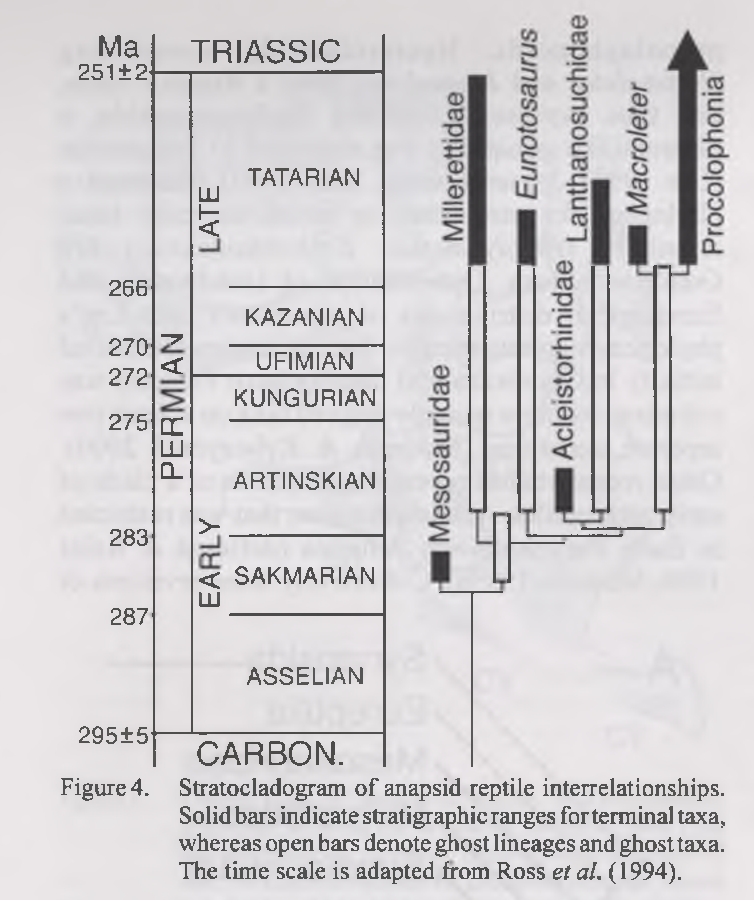 PDF] Eunotosaurus africanus and the Gondwanan ancestry of