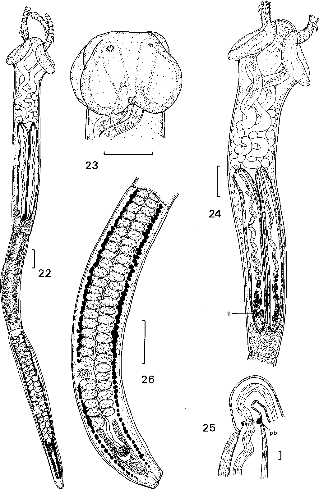 figure 22–26