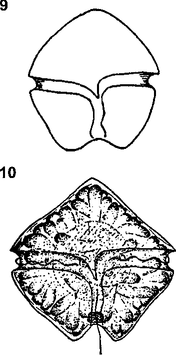 figure 9,10