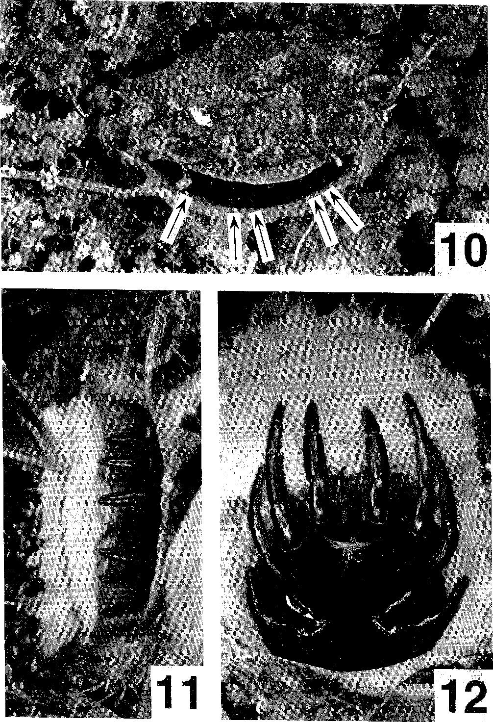 figure 10-12
