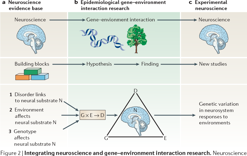 Gene Environment Interaction >> Figure 2 From Gene Environment Interactions In Psychiatry