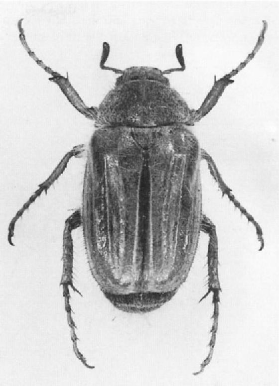 figure 32.6