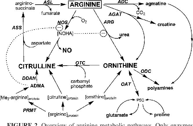 Figure 2 from Arginine: beyond protein 1-4 - Semantic Scholar