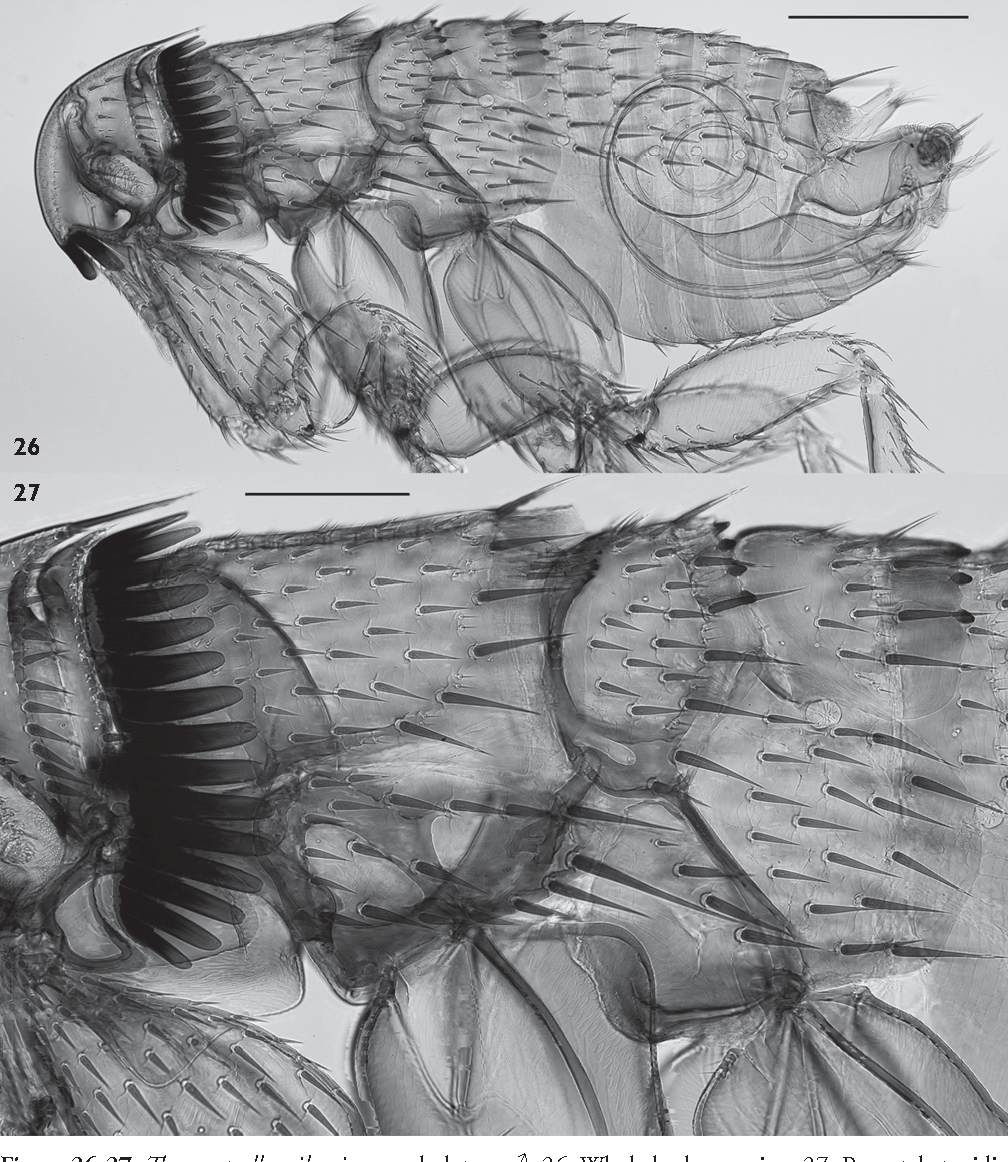 figure 26-27
