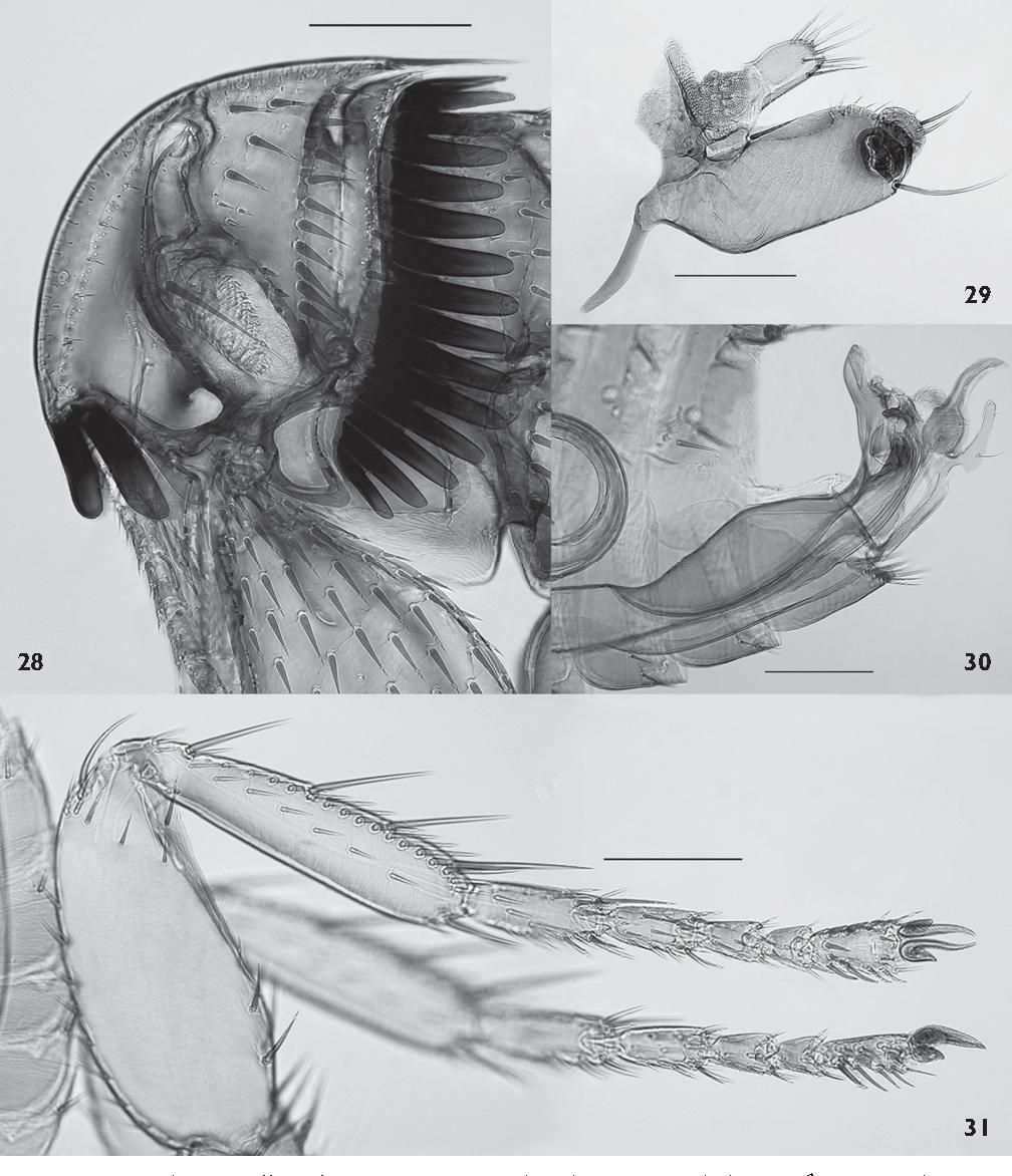 figure 28-31