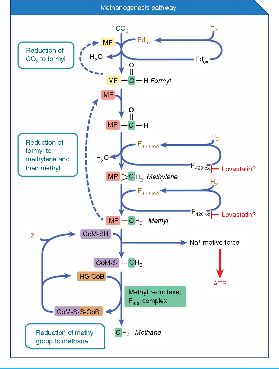Review article: inhibition of methanogenic archaea by