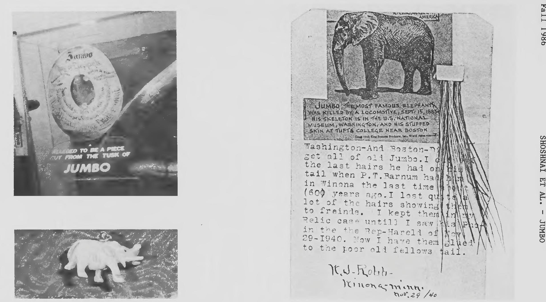 Pdf Jumbo Origin Of The Word And History Of The Elephant Semantic Scholar Jumbo the elephant matriarch film timothy q. pdf jumbo origin of the word and